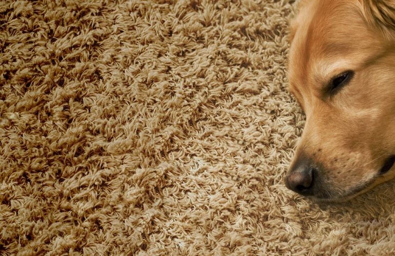 Carpets the whole family will love